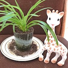 Vulli Sophie the Giraffe with a Plant